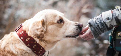 Tierarztpraxis d'Orazio Futter und Fütterung von Haustieren
