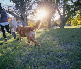 Gesundheitsvorsorge für ältere Tiere!