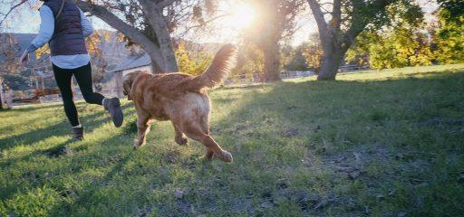 Tierarztpraxis d'Orazio Vorsorgeuntersuchung für Haustiere