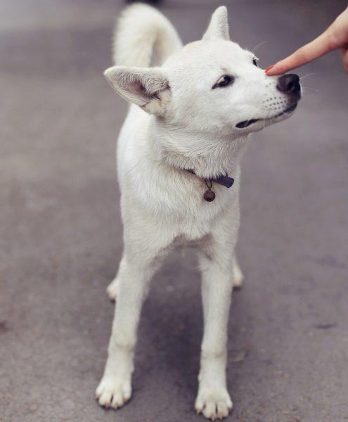 Tierarzt Hietzing Heimtierausweis Hund