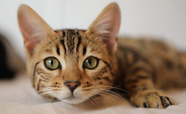 Tierarztpraxis d'Orazio EU-Heimtierausweis Katze