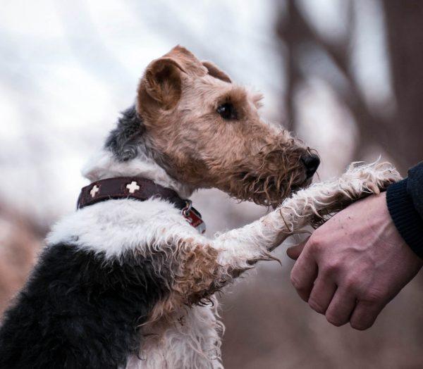 Tierarztpraxis d'Orazio - Entwurmung beim Hund