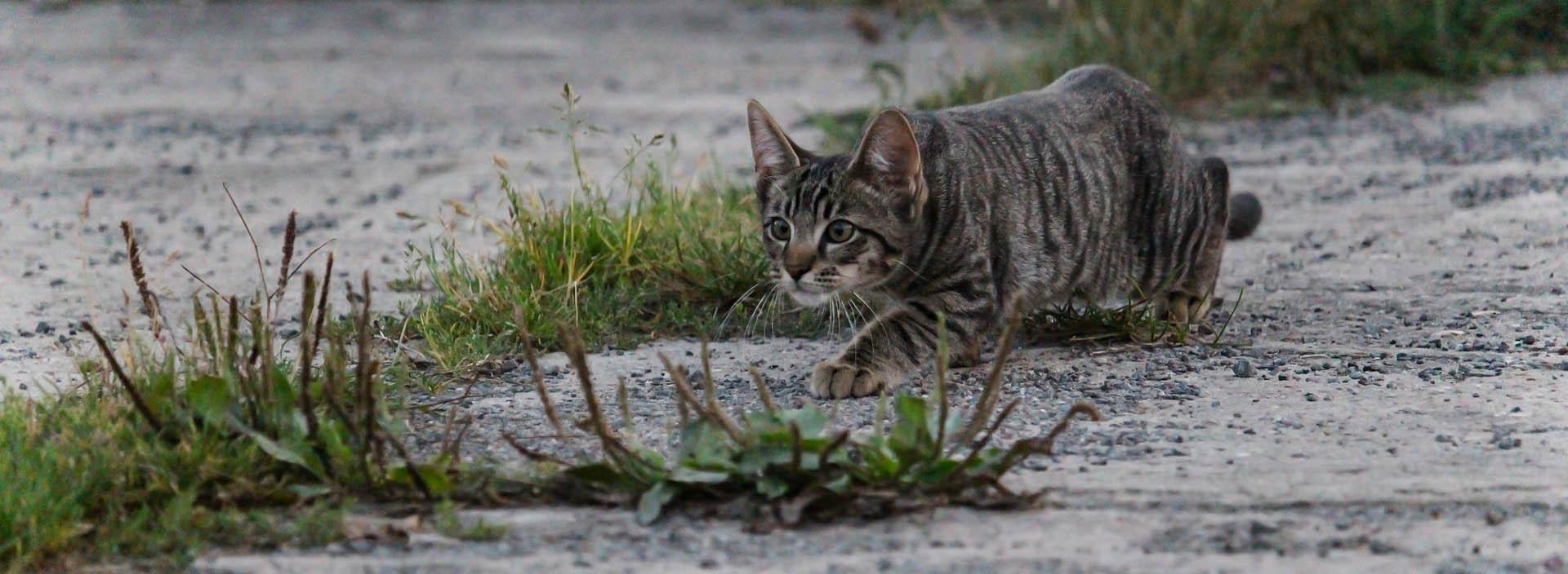 Tierarztpraxis d'Orazio - Entwurmung von Haustieren