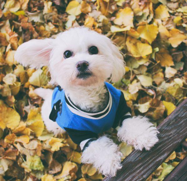 Tierarztpraxis d'Orazio Blasenentzündung Hund