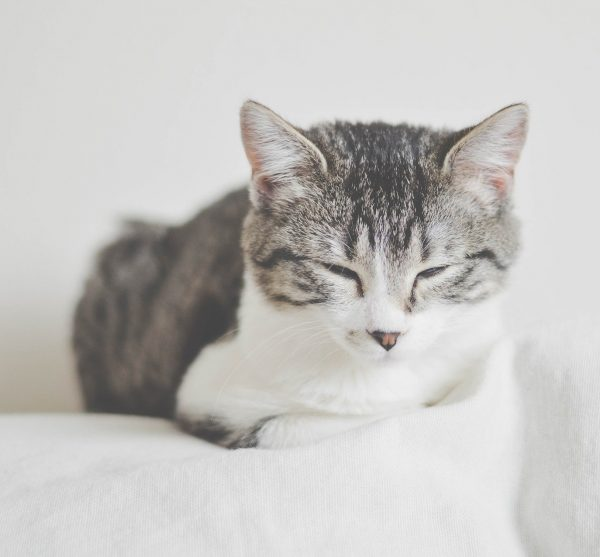 Tierarztpraxis d'Orazio Blasenentzündung Katze