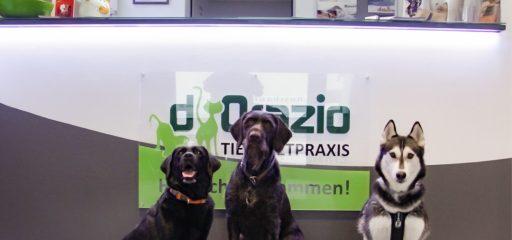 Tierarztpraxis d'Orazio: Schau auf dich - Schau auf mich - Schau auf uns!