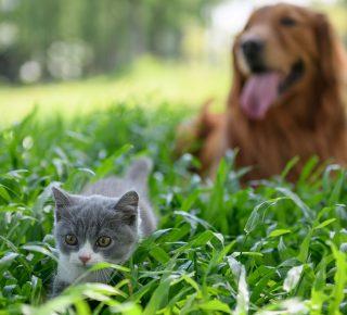 Schutz vor Zecken – Vorsorge ist wichtig!