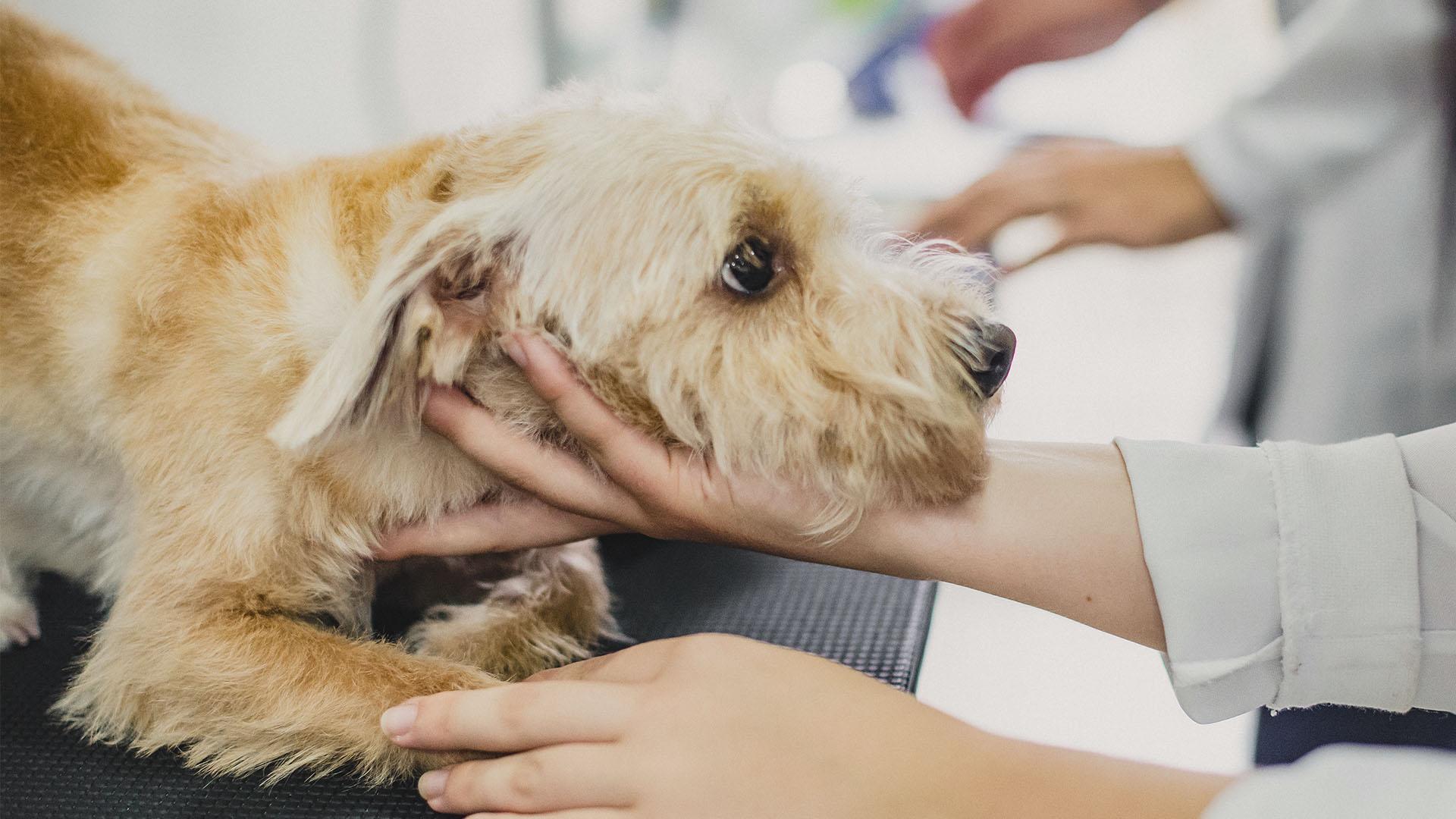 Tierarztpraxis d'Orazio - Schutz vor Zecken